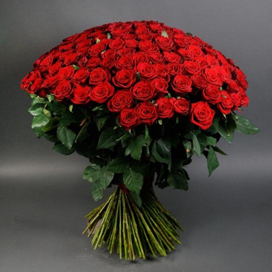 Букет из 101 розы Маричка