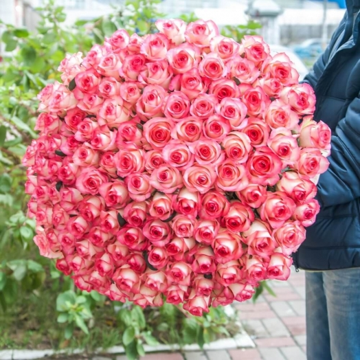 Promotion on Jumilia roses from 13 to 19 January