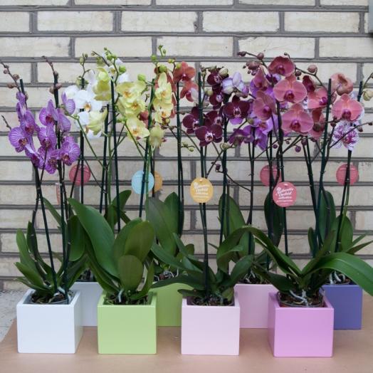 Новинки комнатных растений в магазине на ул.Ливарская 2а