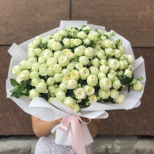 Роза спрей недели - Сноу Ворлд