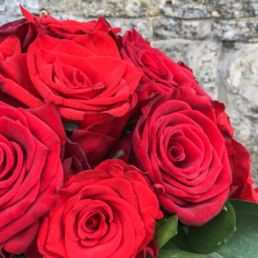Week of Marichka rose