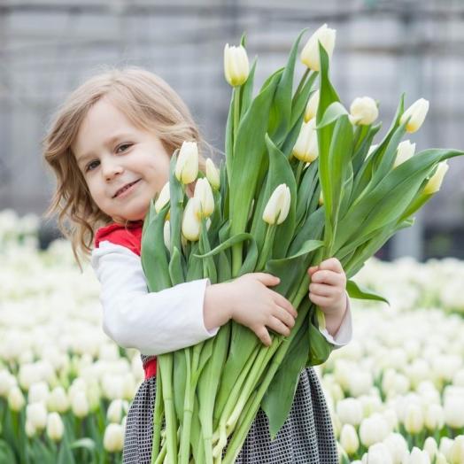 Цветы от «Камелия» - голландские сорта, украинское производство, безхимичное выращивание